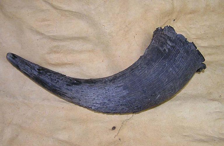 Zde je vybraný bizoní roh.