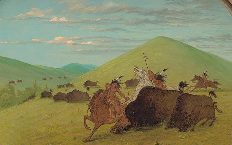 Bizoní býk se snaží chránit krávu s teletem. Lovecký výjev na obraze George Catlina. Indiánští lovci pravděpodobně sprovodili ze světa všechna zvířata a pak zpracovali pouze krávu. Zbytek nechali shnít.