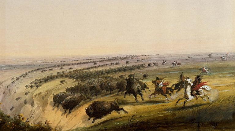 Bizoní skok na dobovém obraze známého malíře Alfreda Jacoba Millera. Zde jsou bizoní nahánění s pomocí koní.