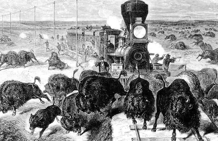 Bizoni vs železnice. Dobová kresba.