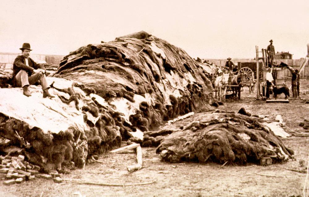 Stovky bizoních kůží byly zajímavou tržní komoditou.