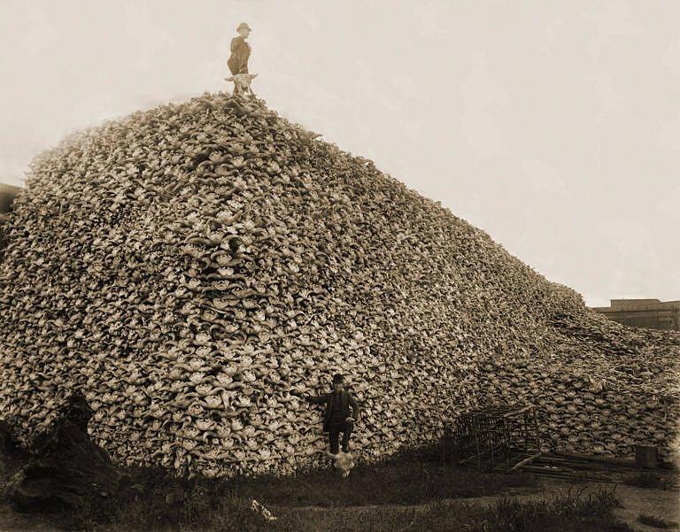 Hromada tisíců bizoních lebek. Surovina pro průmyslové využití.