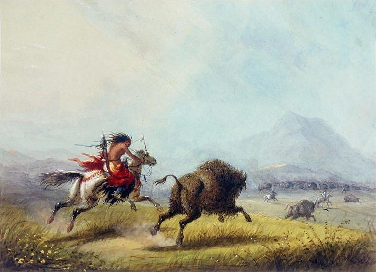 Indiáni preferovali bizoní krávy nad býky. Většinou ale zabíjeli všechna vířata a pak si vybrali jenom ty kusy, které se jim hodily. Obraz od Alfreda Jacoba Millera