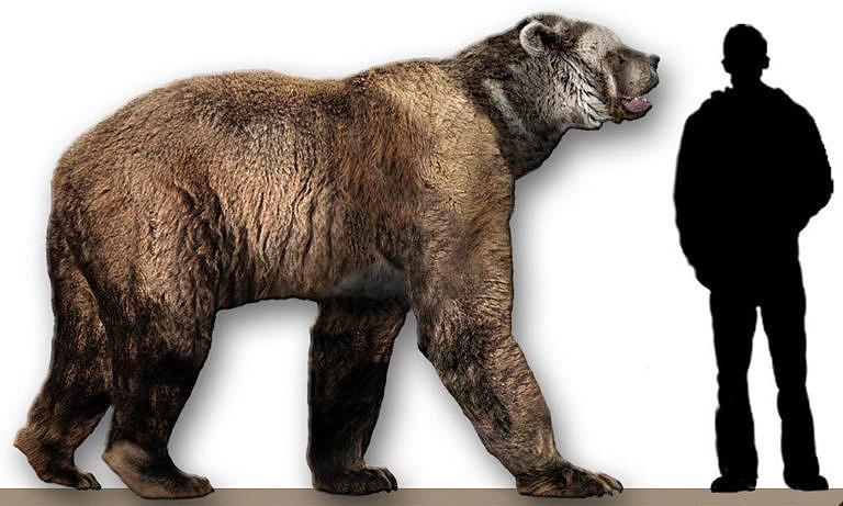 Medvěd krátkočelý v porovnání s člověkem. Jako predátor byl tak strašný, že se mu paleo indiáni nebyli schopni účině bránit.