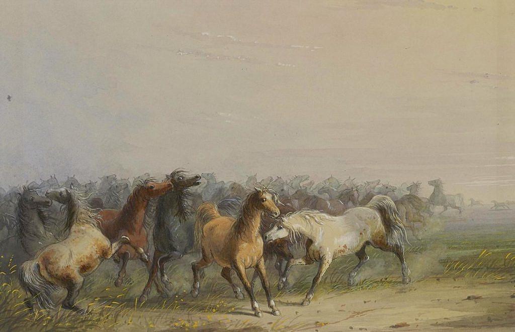Stádo indiánských poníků na dobové malbě Alfreda Jacoba Millera.