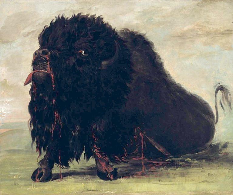 Smrtelně zraněný a umírající bizon na obraze George Catlina.