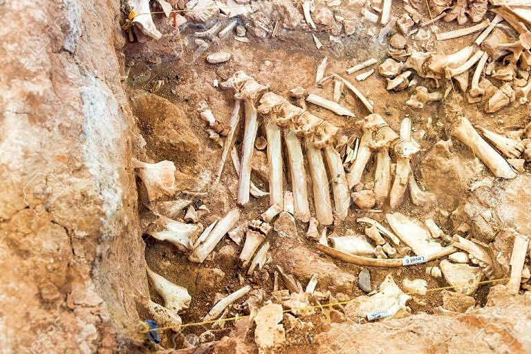 Hromada kostí pod bizoním skokem je podrobena vědeckému zkoumání. Často se mezi nimi nacházejí projektily pazourkových hrotů. Země pod bizoním skokem může ukrývat kosti až několika set tisíc bizonů.