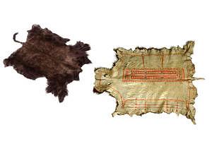 Porovnání bělošského a indiánského způsobu stahování zvěře.