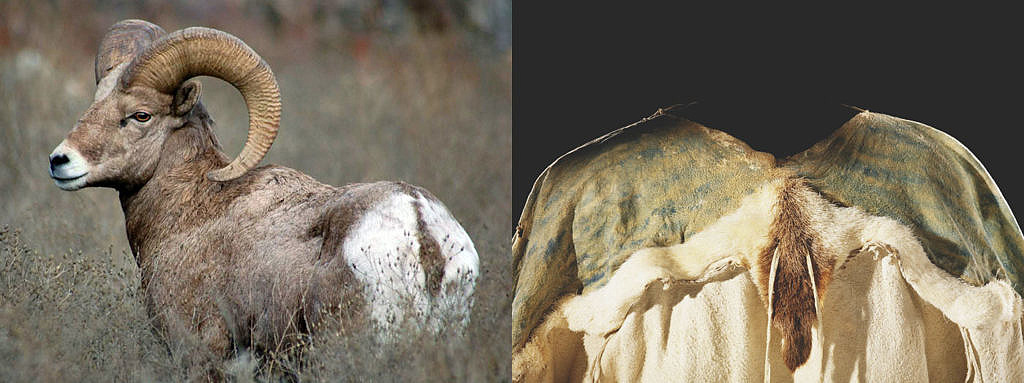 Příklad využití kůže z ovce tlustorohé na ženské šaty. Srst na ocasu a části zadních běhů byla ponechána jako ozdoba.