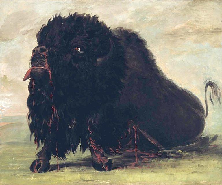 Smrtelně zraněný a umírající bizon na malbě George Catlina.